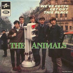 AnimalsWeGotta